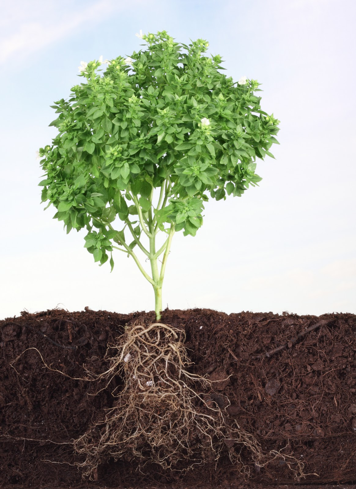 Crescimento Espiritual parte II